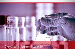 Cientistas criam mini coração